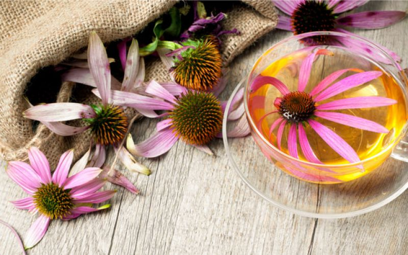 Echinacea, but which one to choose?