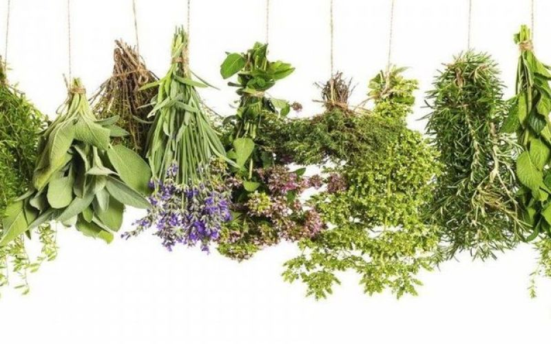 The historical roots of herbs and their value today